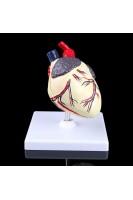 Сердце собаки. Модель в масштабе 1:1. (2 части)