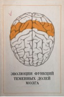 Эволюция функций теменных долей мозга (БУ). Батуев А.С.. Наука